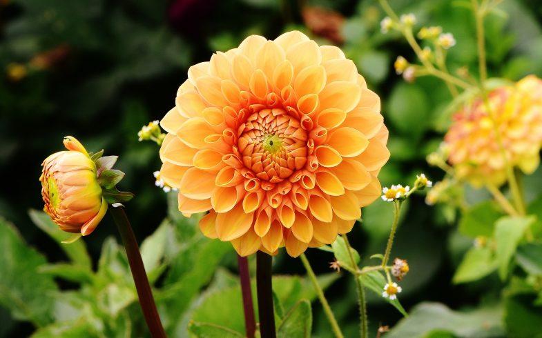 Growing Flowers in your Garden